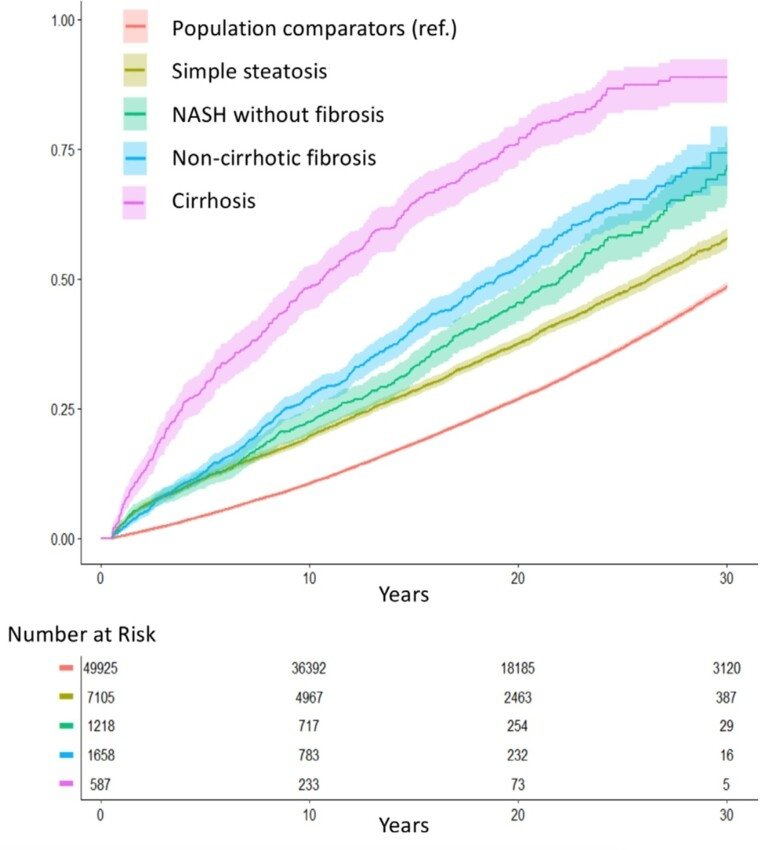 A graph that shows the differences in mortality at different stages of fatty liver disease