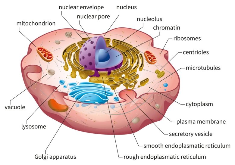 Illustration of the cell structure.
