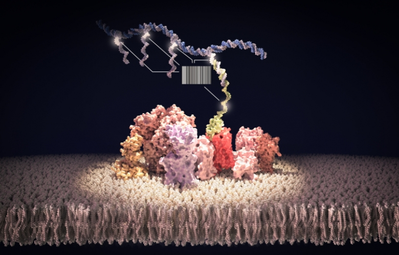 Illustration of how DNA-analysis is used on cell membranes.